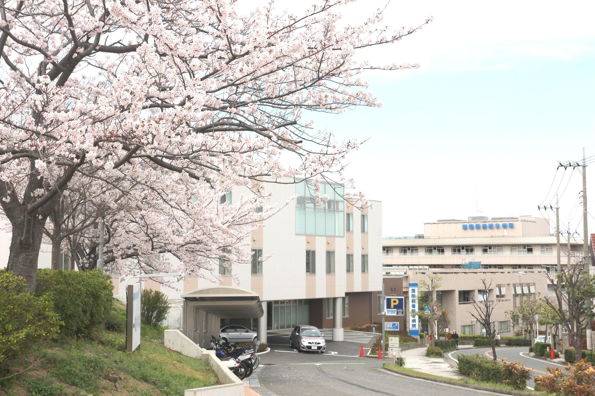 桜の綺麗な春の病院外観。駐車場の桜の下で、花見を行うこともあります。