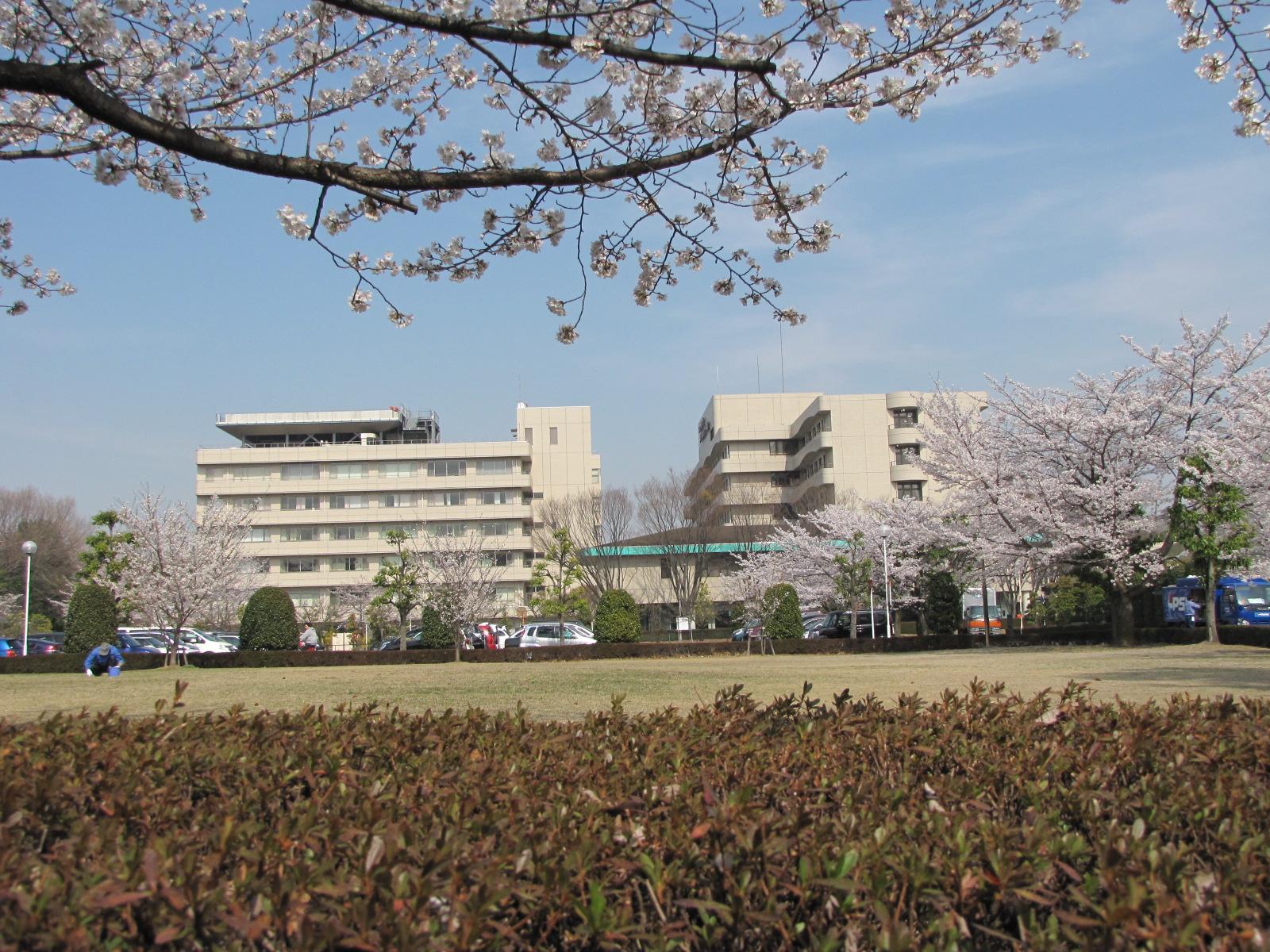 春は桜がきれいです。